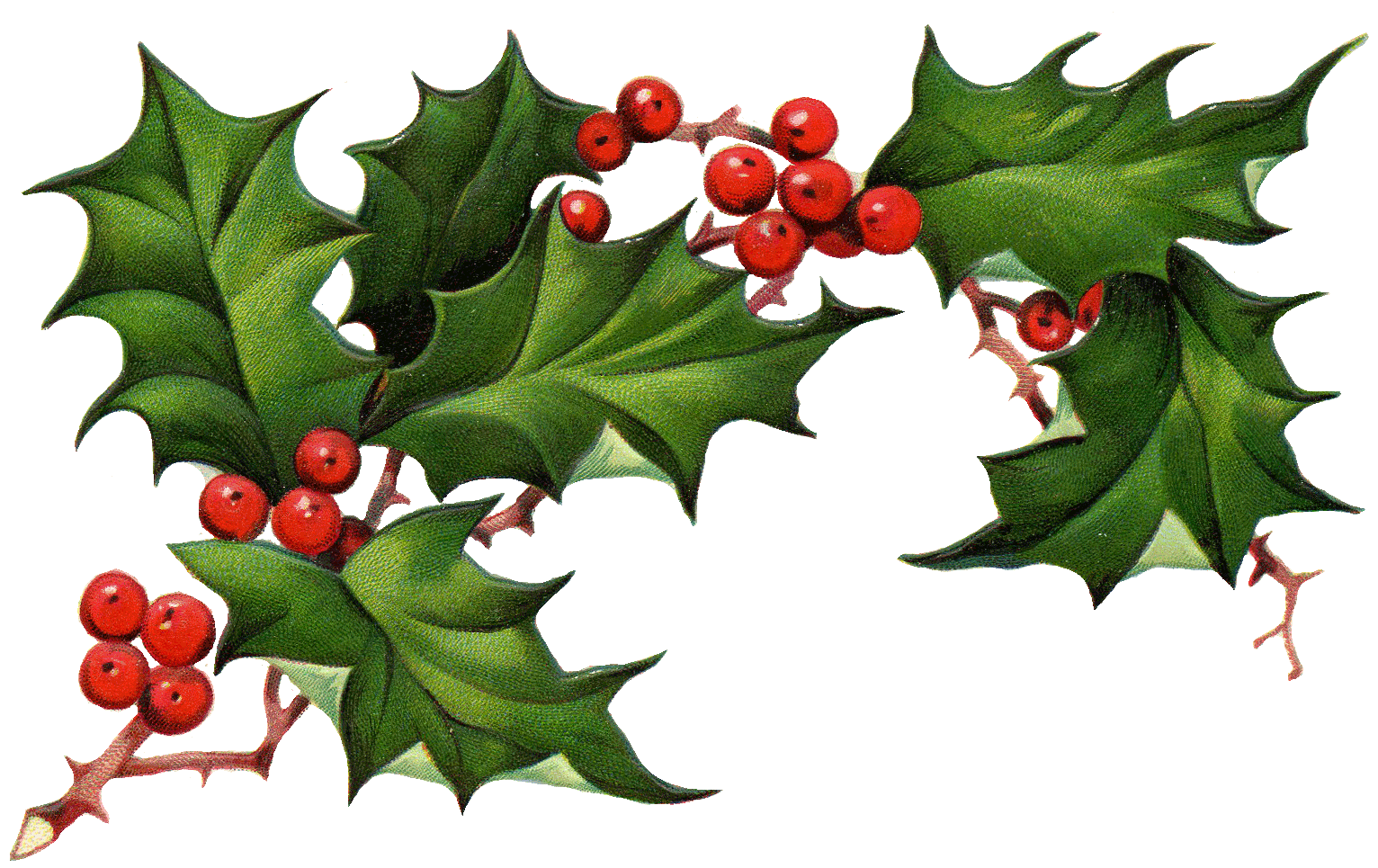 transparent library Christmas clipart free borders. Holley holly berry on