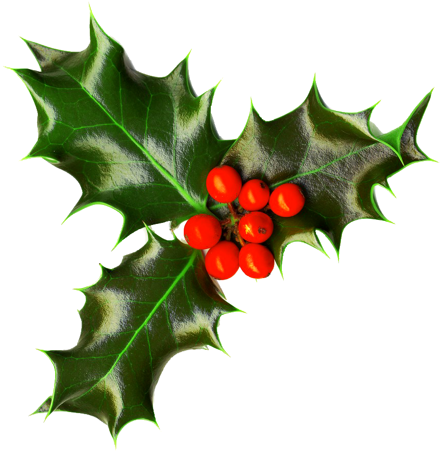 royalty free stock Christmas png images free. Holly transparent