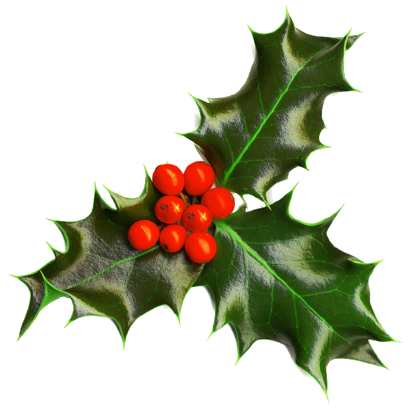 image library stock Holly Transparent background