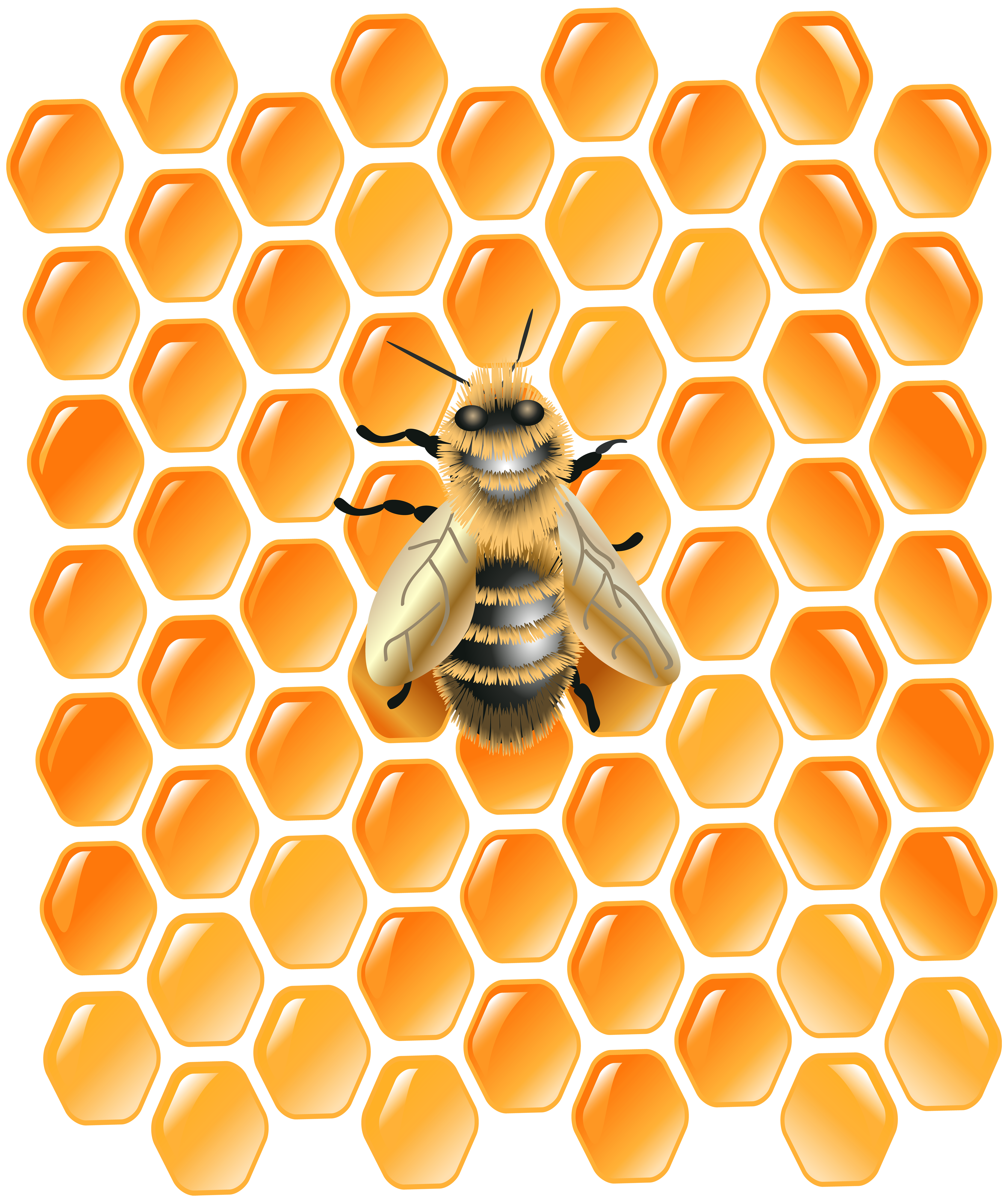 graphic free library With bee png clip. Honeycomb clipart orange.