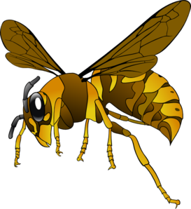 graphic library download Brown yellow clip art. Hornet clipart.