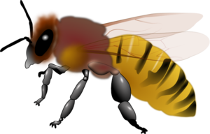 png transparent library Clip art at clker. Hornet clipart.