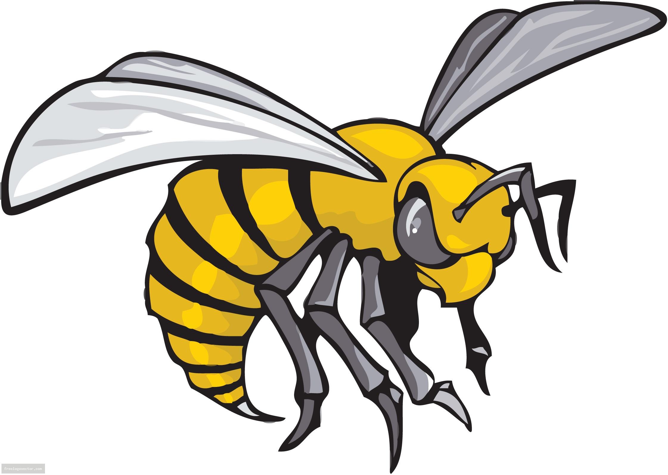 jpg free download Hornet clipart mascot. Wikiclipart