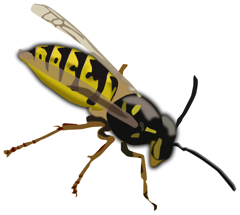 vector transparent stock Wasp Clip Art Free