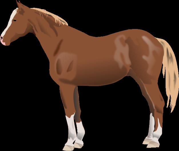 clip art transparent library Download clip art free. Horse clipart