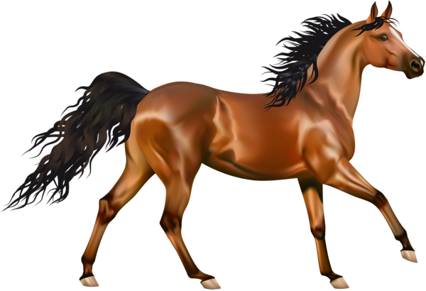 picture library Brown pinterest. Realistic clipart horse