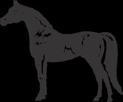 image free library arabian horse clipart #64876344