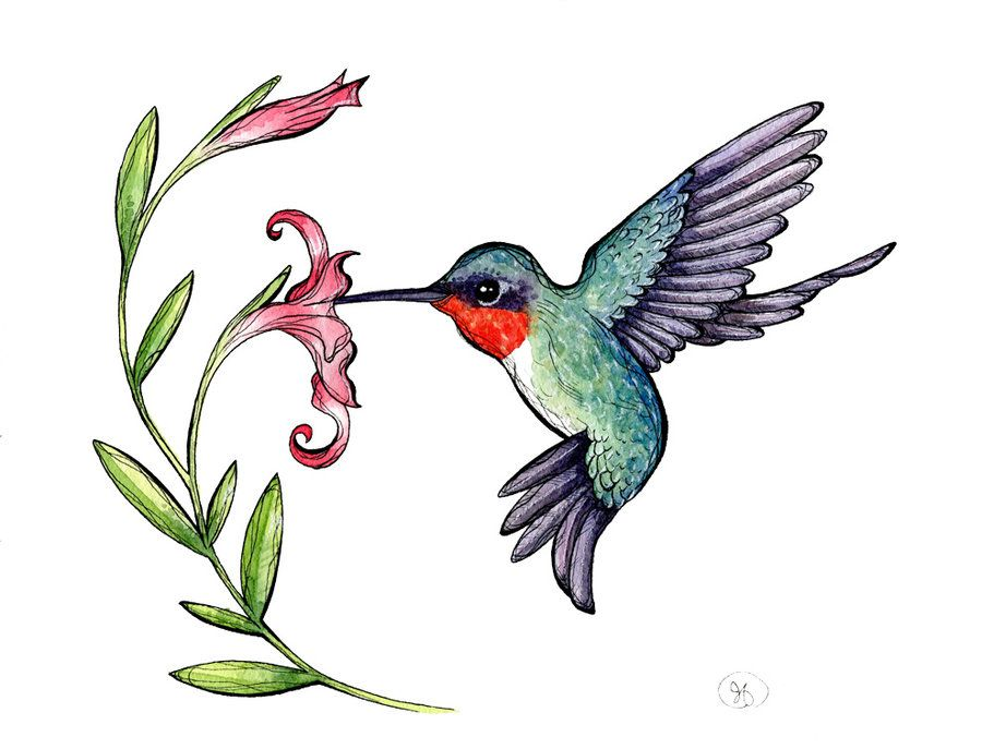 clip art transparent library Hummingbird clipart. Free images image in