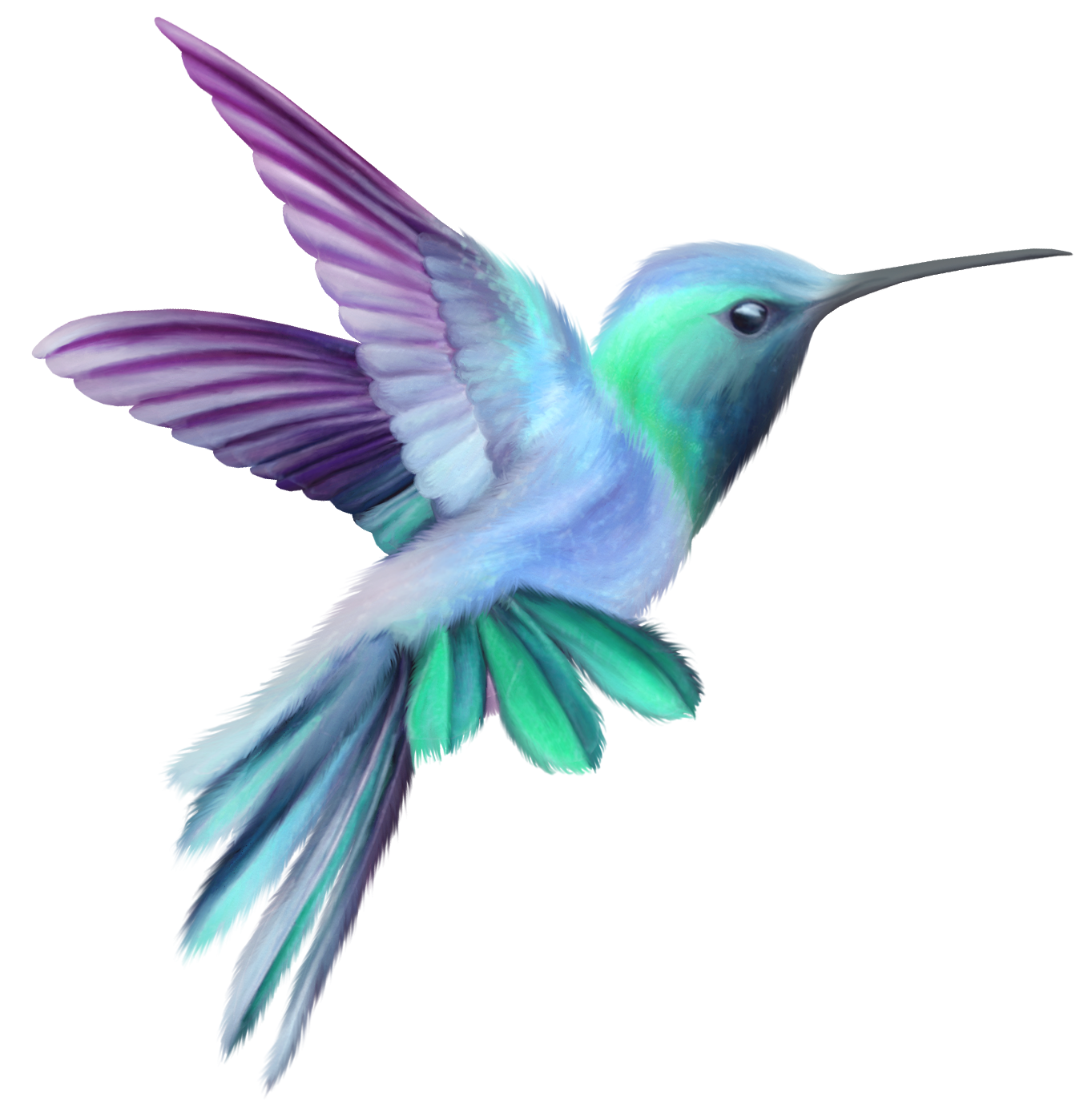black and white library Hummingbird clipart. Transparent clip art image.