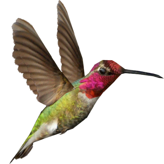 svg free Hummingbird Transparent