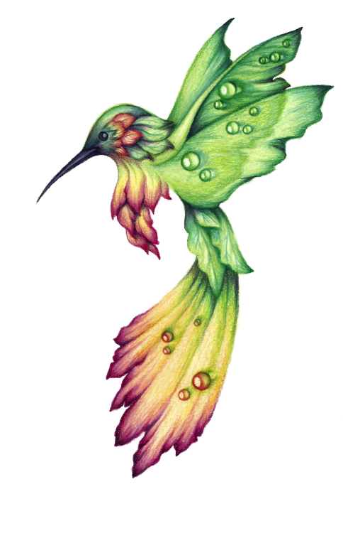 jpg royalty free download hummingbird drawings