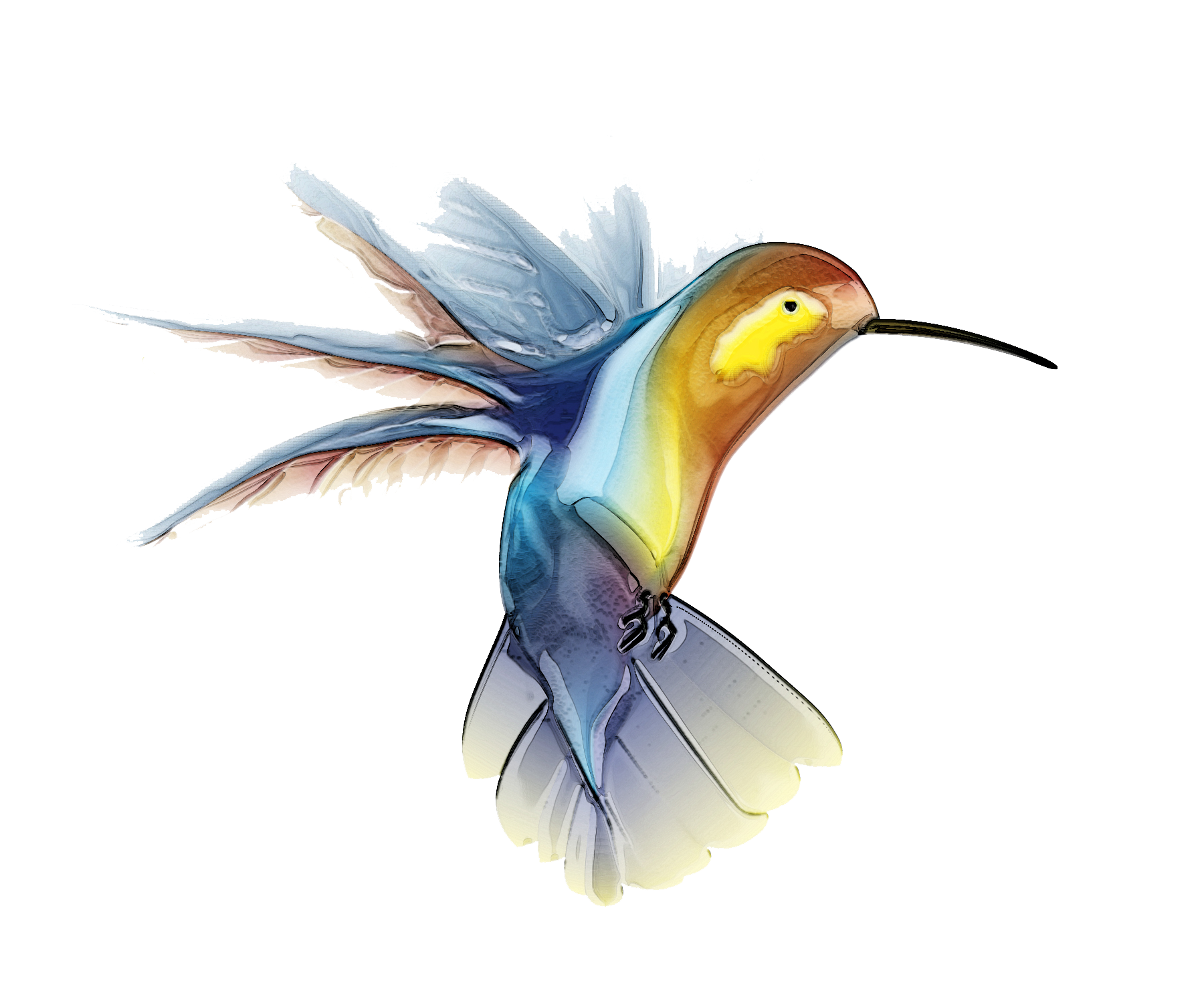 picture free download Hummingbird clipart forest bird
