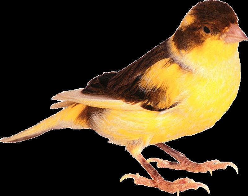 png freeuse stock hummingbird clipart spring robin #79826562