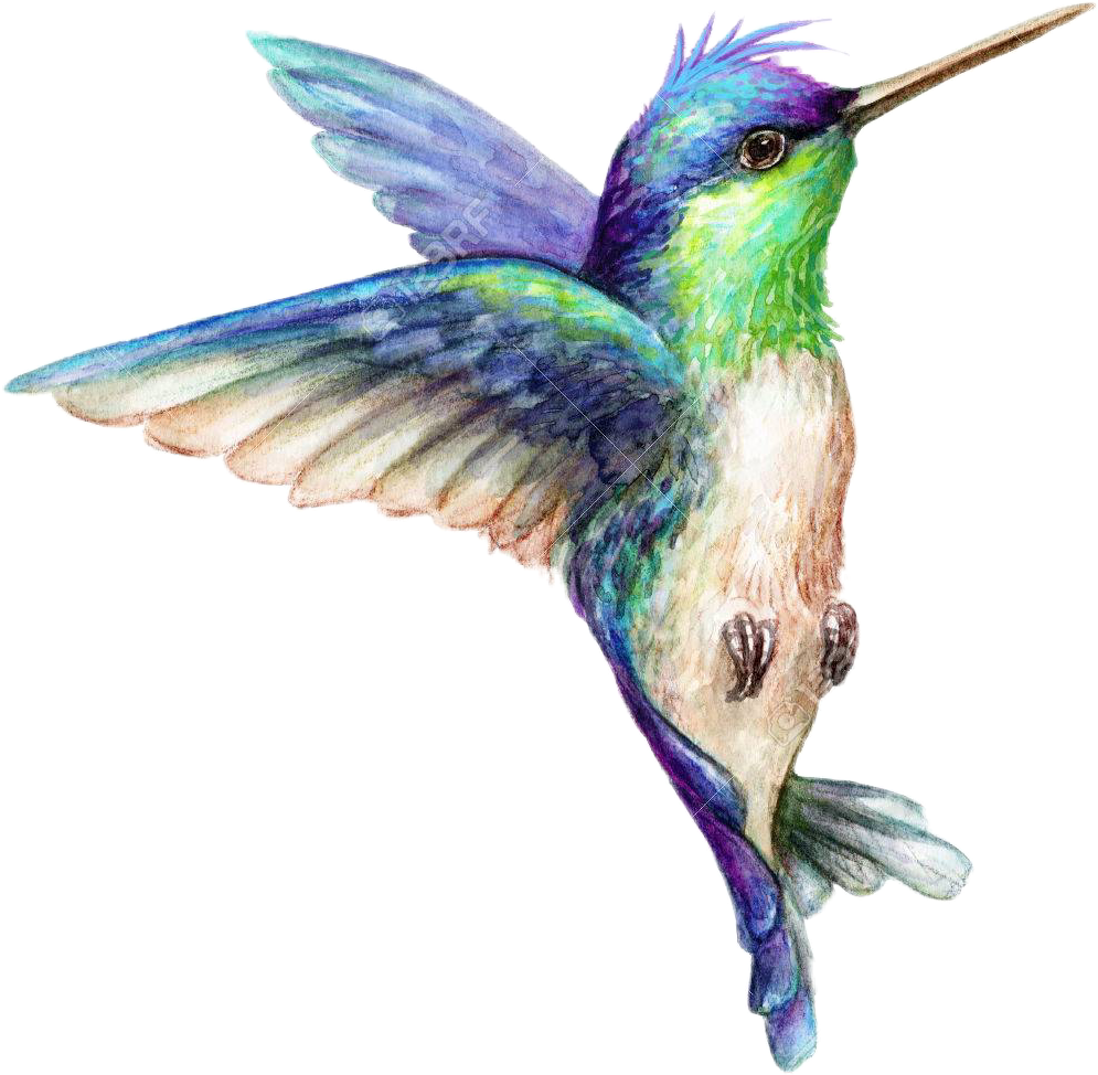jpg black and white download art hummingbird hummingbirds bird birds animals animal