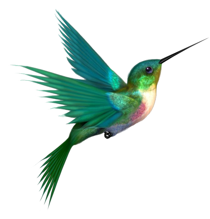 image freeuse library Hummingbird PNG Transparent Images