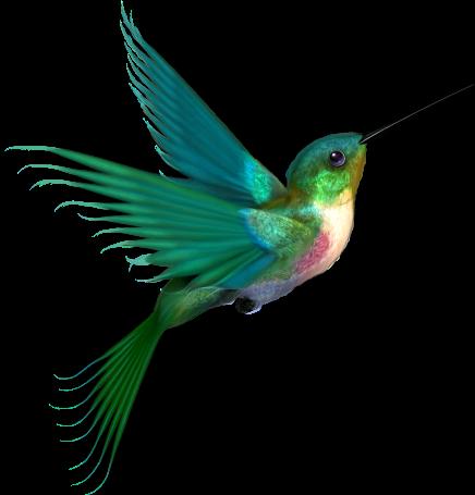 clip free Bird Clipart