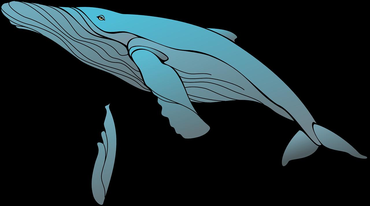 clip art royalty free stock Sperm clip art blue. Humpback whale clipart