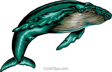 graphic freeuse library Humpback whale clipart. At getdrawings com free.