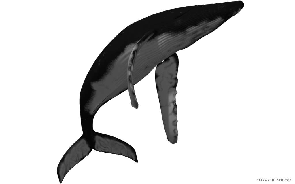 png transparent library Humpback whale clipart. Clipartblack com animal free.