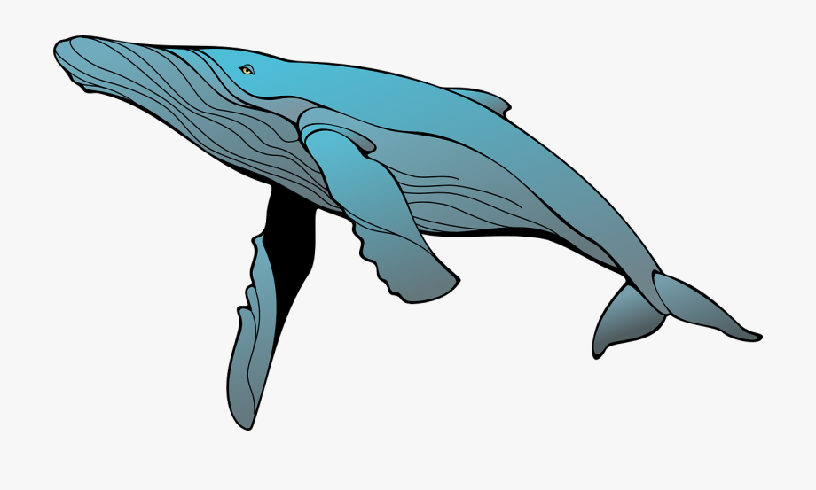 picture transparent download Transparent cartoon free cliparts. Humpback whale clipart.