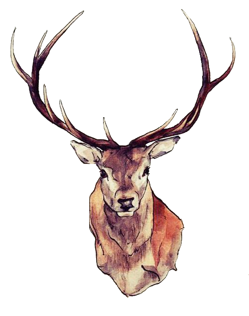 vector black and white library antlers transparent watercolor #109552316