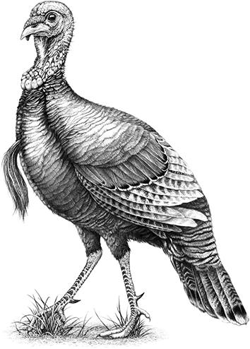 picture free Wild Turkey Bourbon is super