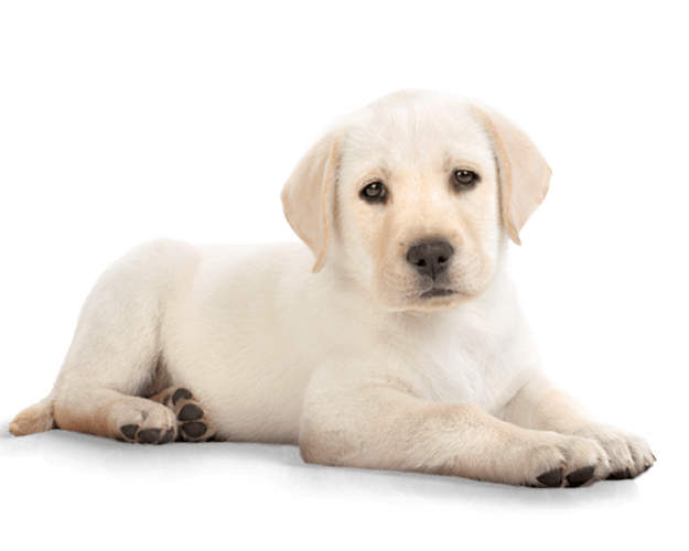 png download Puppy transparent. Png images free download