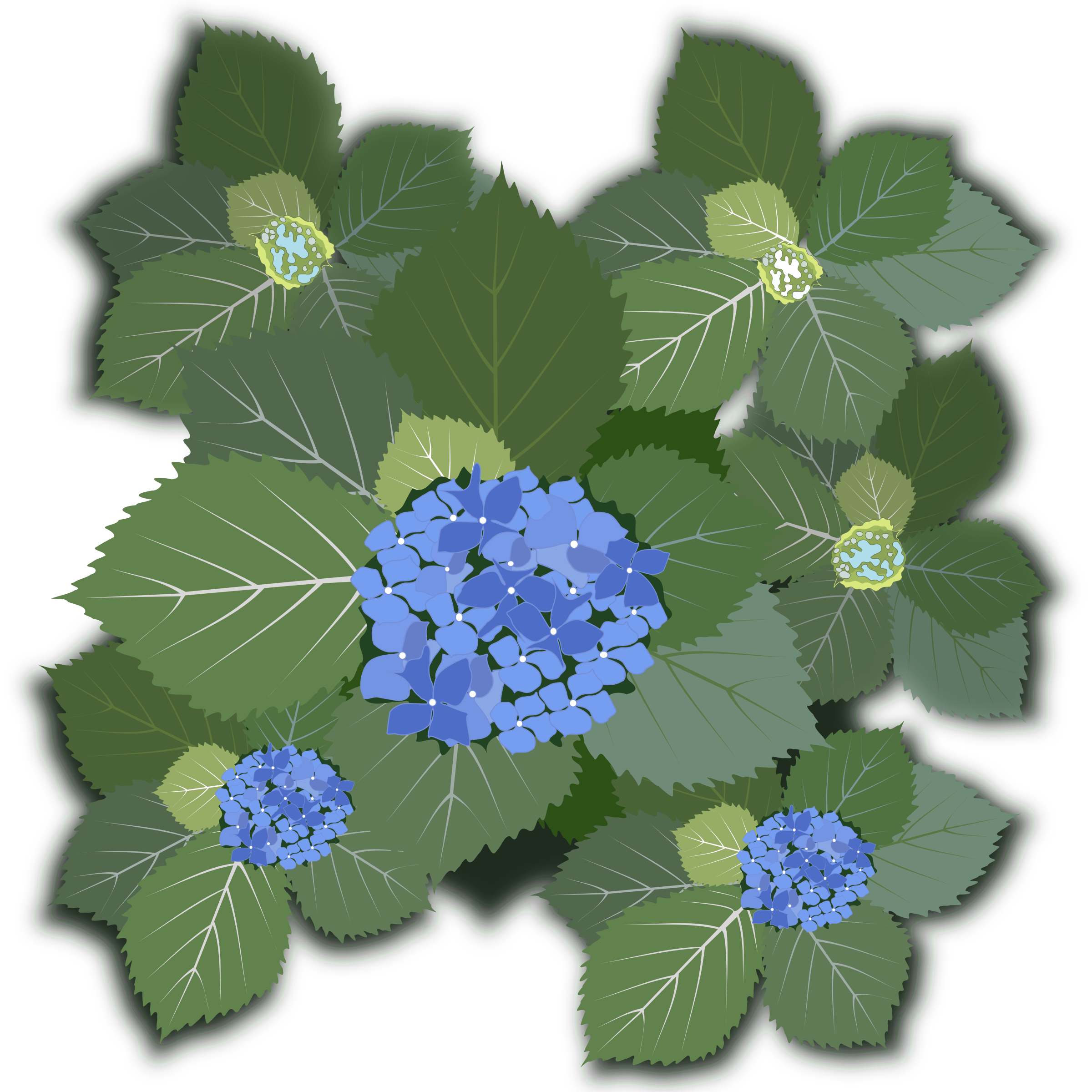 graphic free stock Hydrangea clipart. Macrophylla big image png.