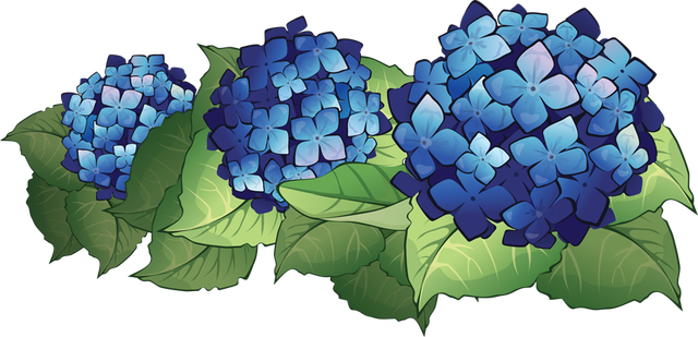 graphic library library Pontiac s rebellion an. Hydrangea clipart.