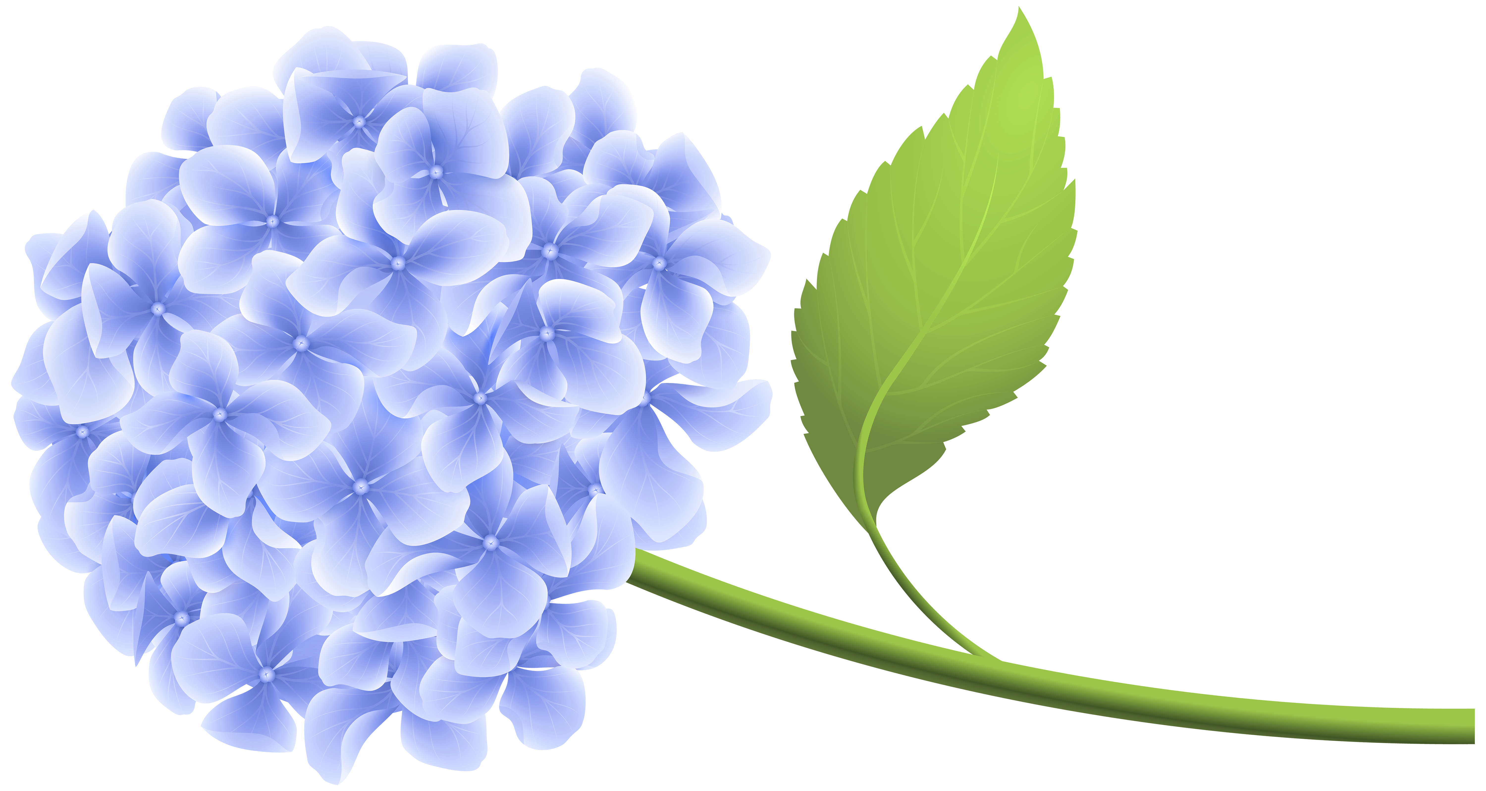 clip transparent library Hydrangea clipart. Blue hortensia png clip.