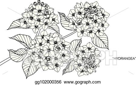 png free Hydrangea clipart draw. Vector art flower drawing.