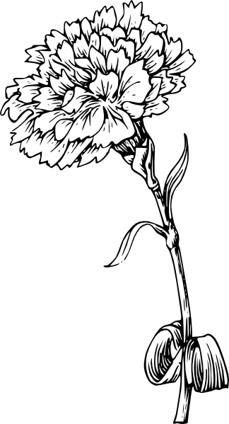clip art transparent download Marigold Line Drawing