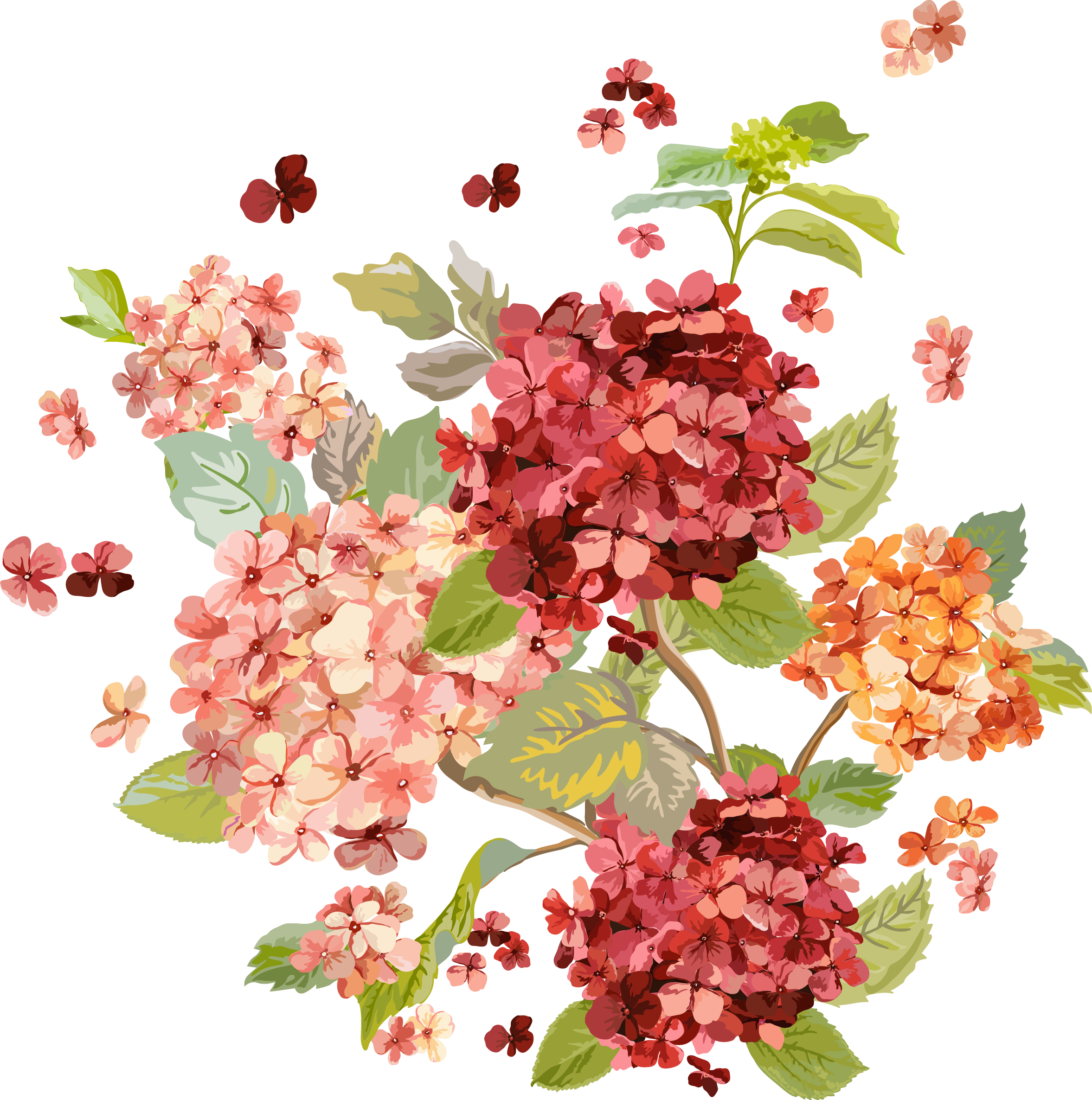 vector freeuse download Hydrangea clipart transparent background. My design autumn flower