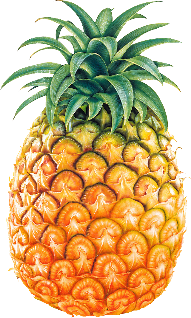 banner free Free cliparting com clipartingcom. Pineapple clipart black and white