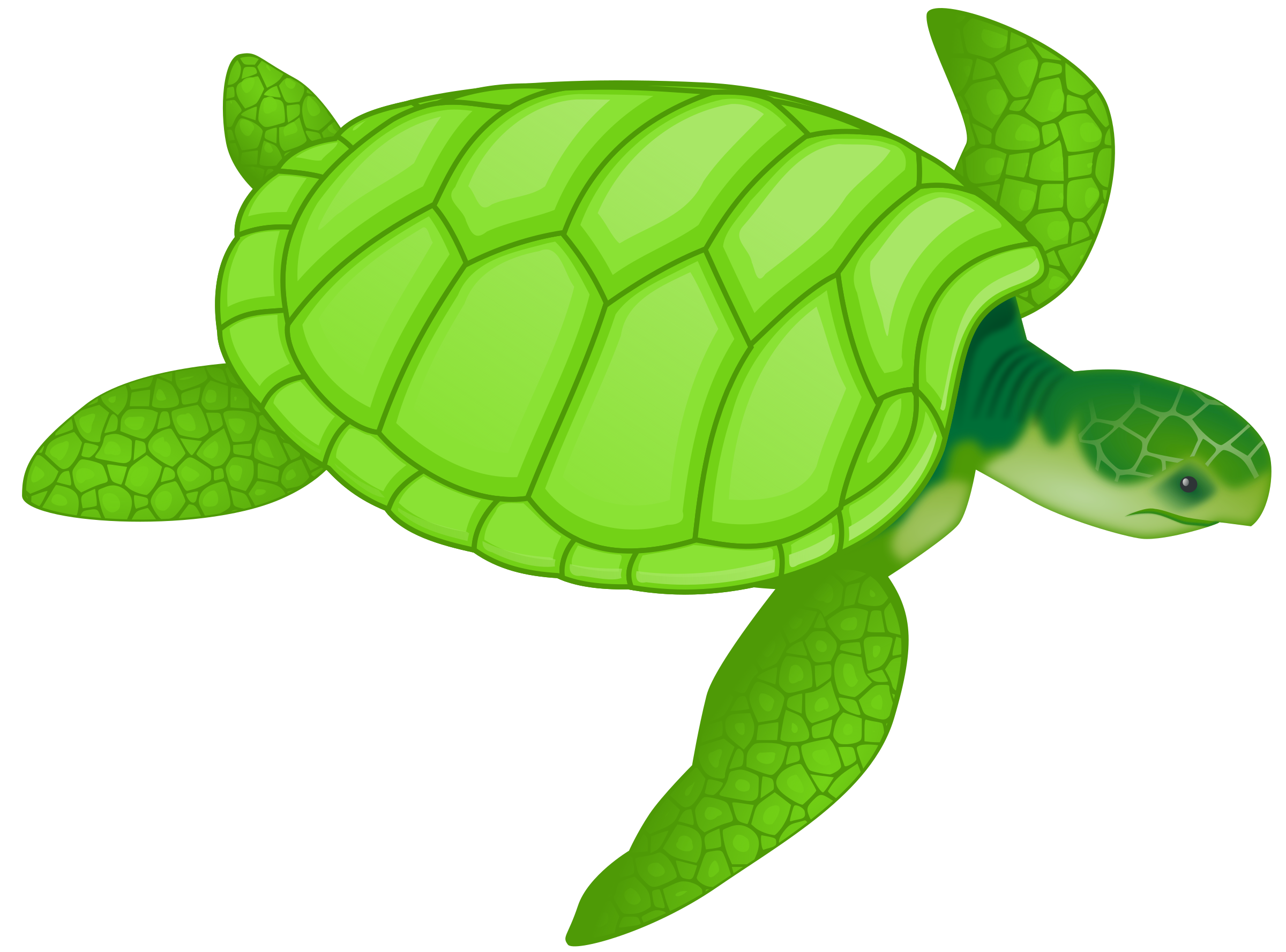 picture stock Sea Turtle Clipart transparent background