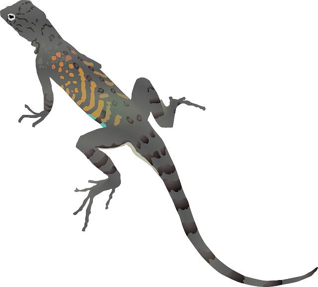 clipart freeuse stock Pin Baby Desert Iguana on Pinterest