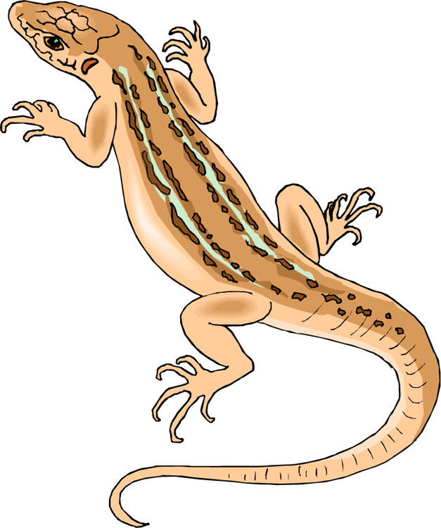 image transparent library Free Lizard Clipart