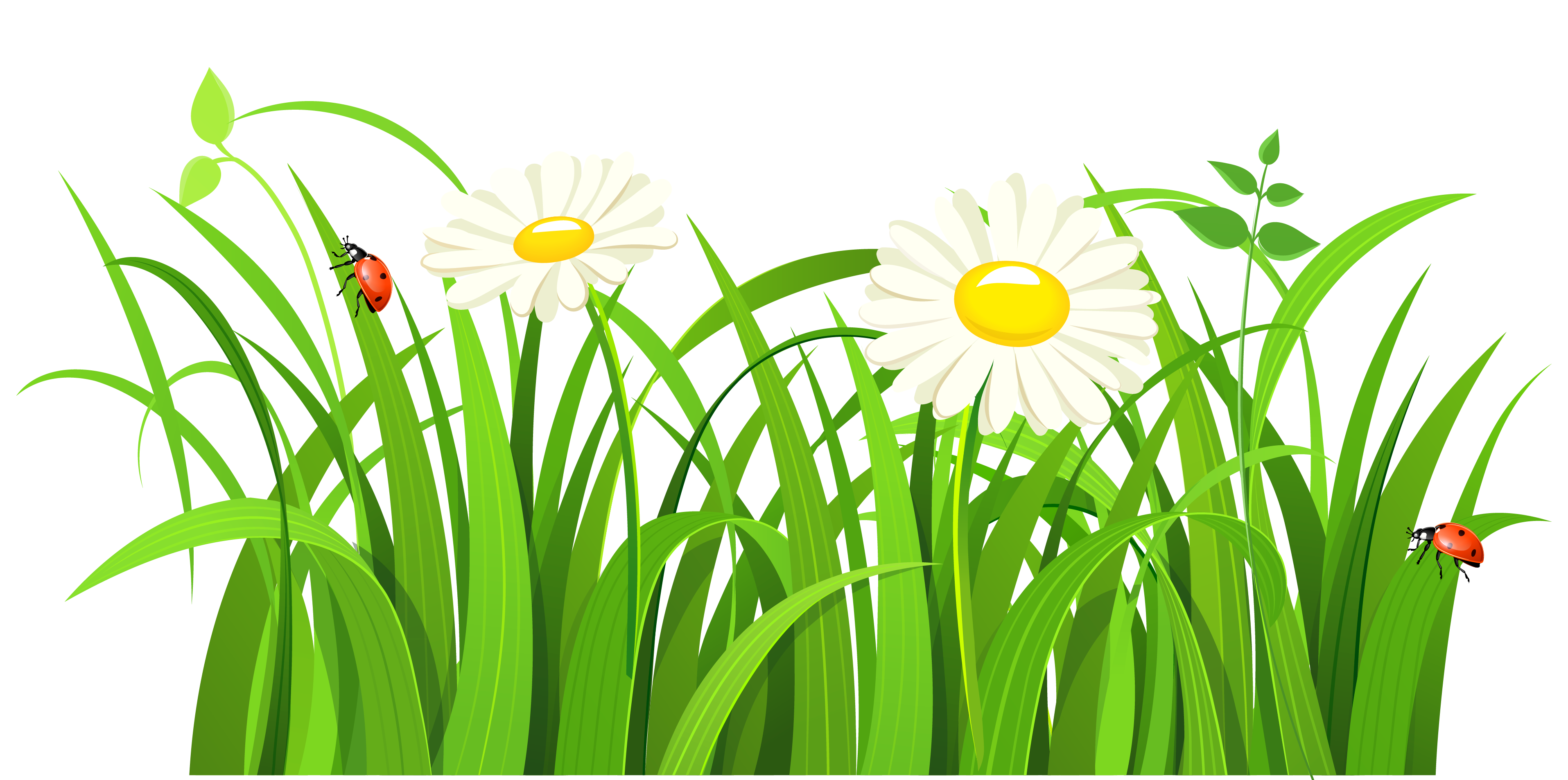 image library stock Grass with daisies and. Lawn clipart quehaceres.