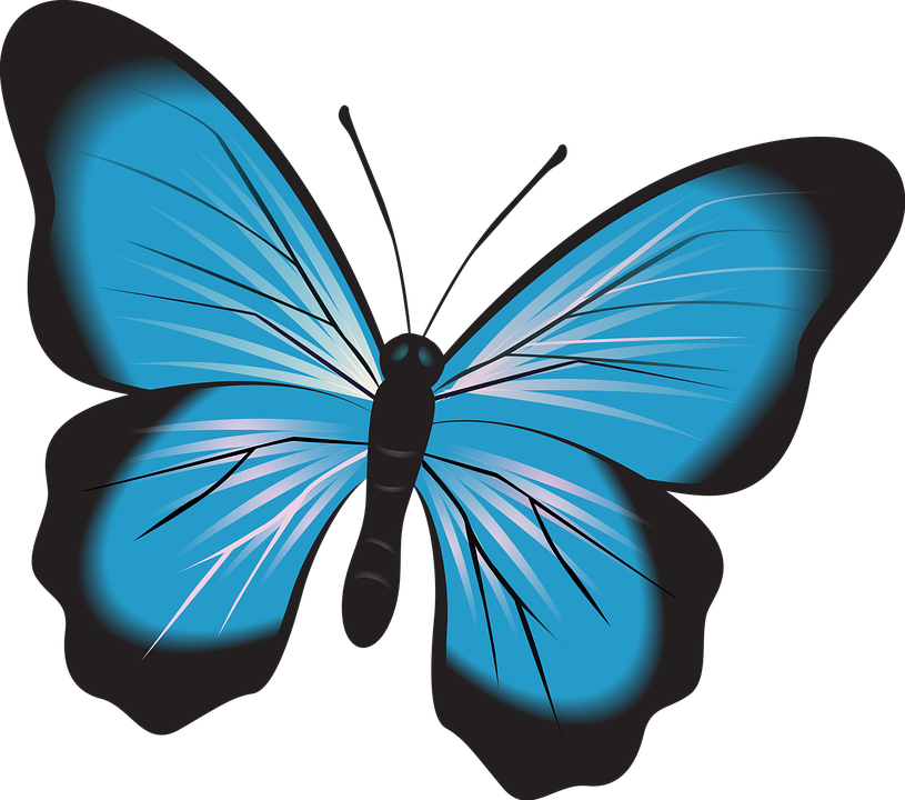 transparent library Moth clipart insect. Serangga free on dumielauxepices.