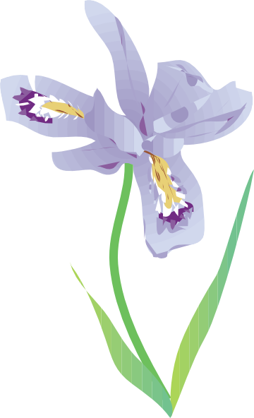 graphic black and white library free vector Dwarf Lake Iris clip art graphic available for free