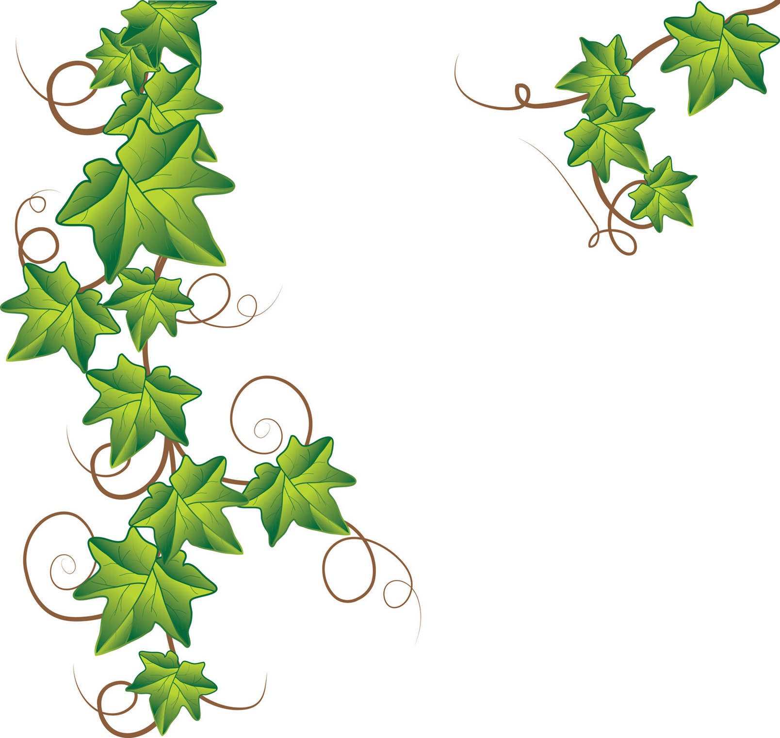 black and white library Vine tattoo designs image. Ivy clipart.