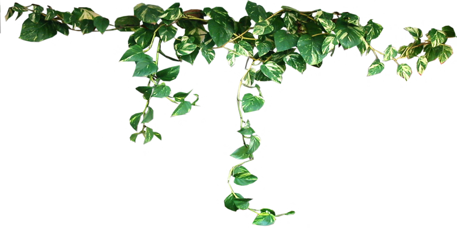 clipart stock Collection of free download. Plants transparent