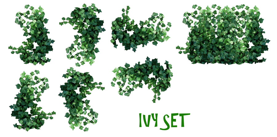 clip art free stock Ivy Plant Drawing at GetDrawings