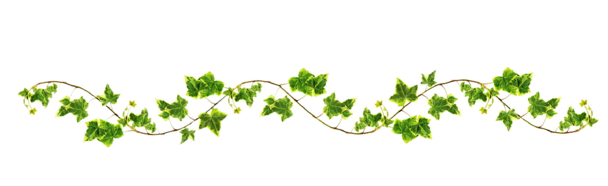 clip free Ivy vine clipart.  collection of png