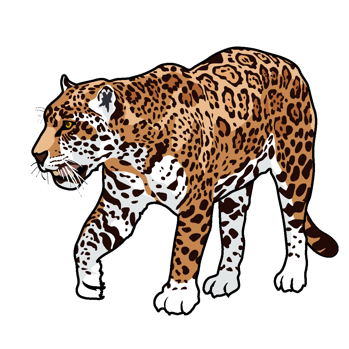 png library library Best clipartion com . Jaguar clipart