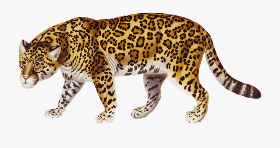 picture free library Jaguar clipart. Png image free cliparts.