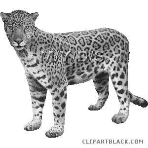 clip transparent library Clipartblack com animal free. Jaguar clipart
