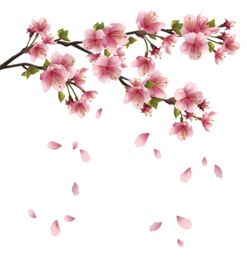 clip library stock japanese cherry blossom tree clipart #60821953