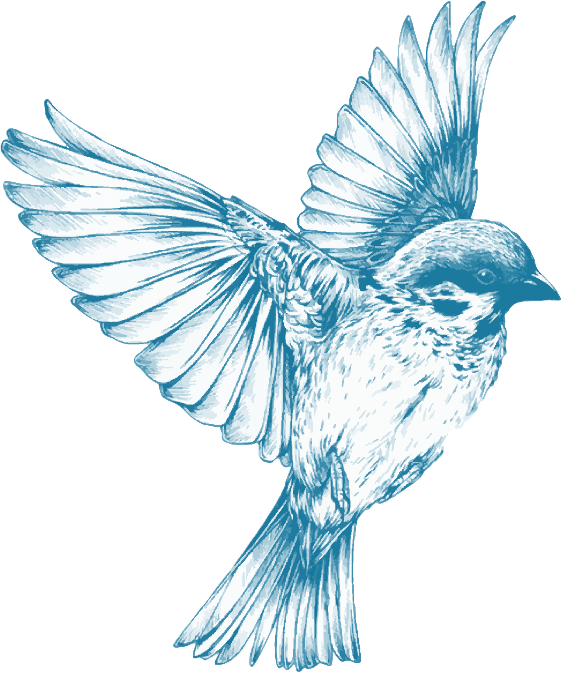 royalty free Blue Bird Flying Drawing at GetDrawings