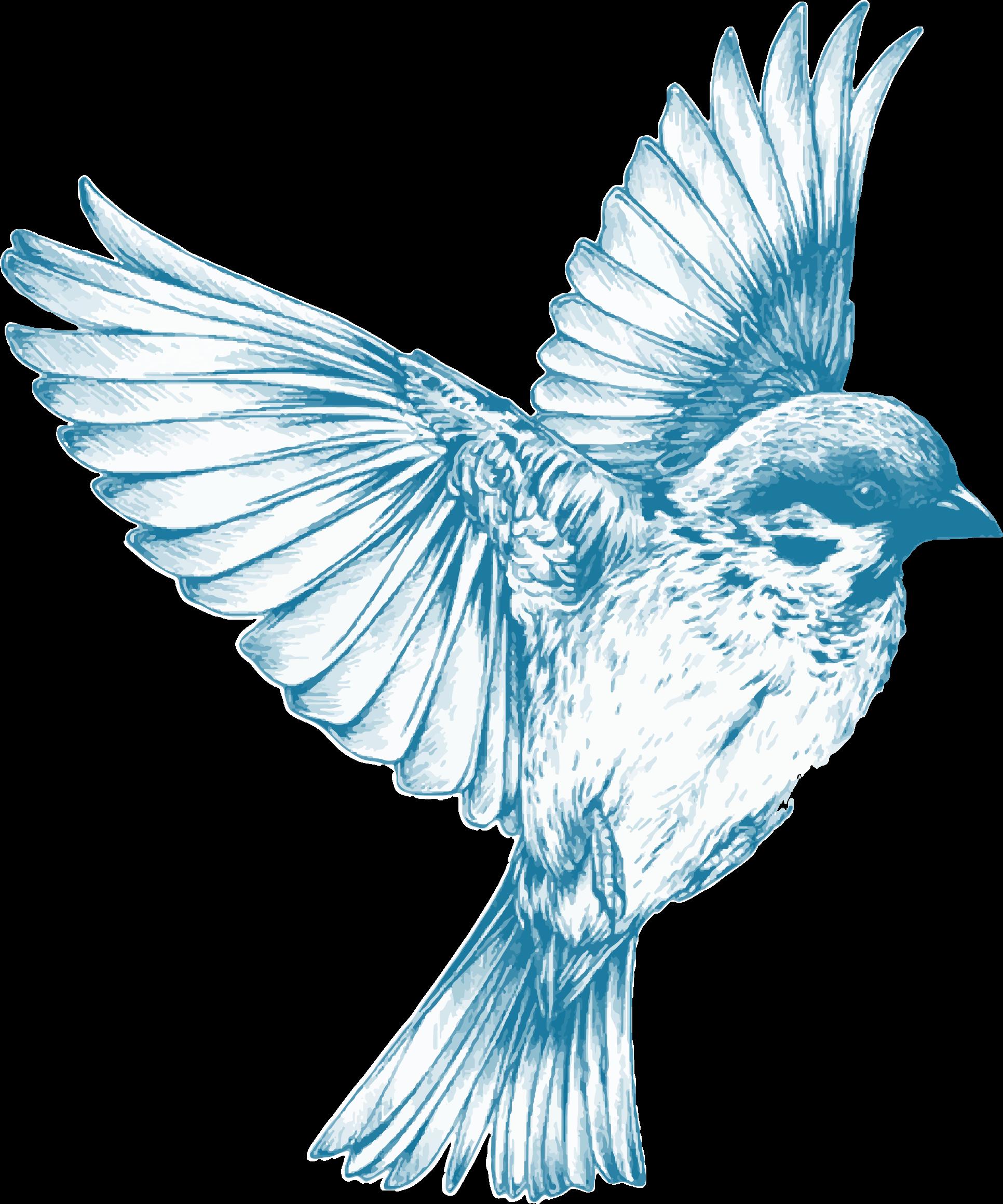royalty free Blue Bird Flying Drawing at GetDrawings